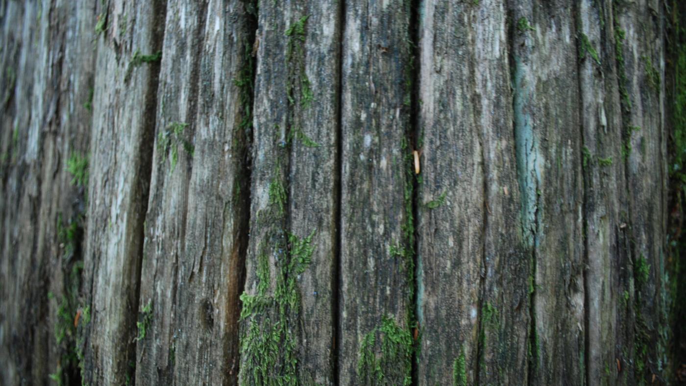 Why Does Removing Bark Kill a Tree?