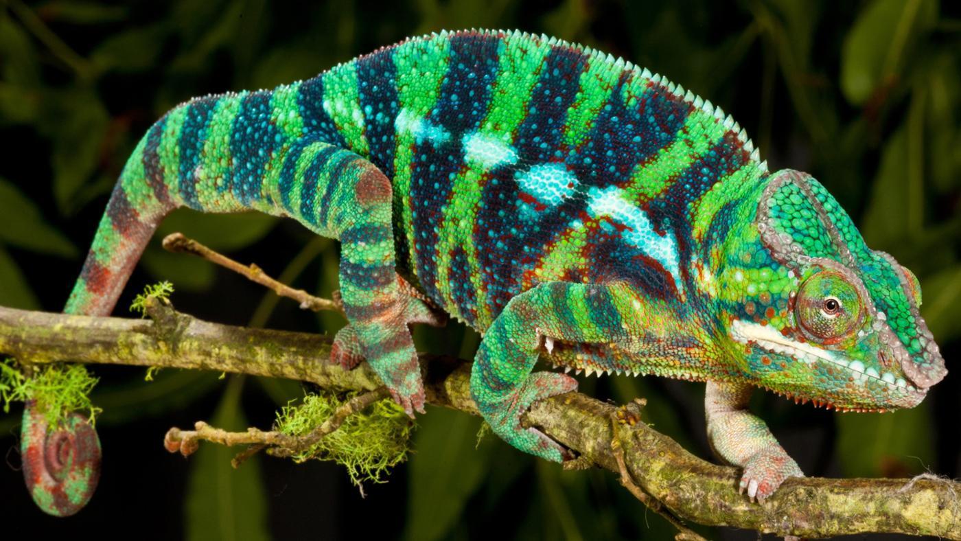 Where Do Reptiles Live?