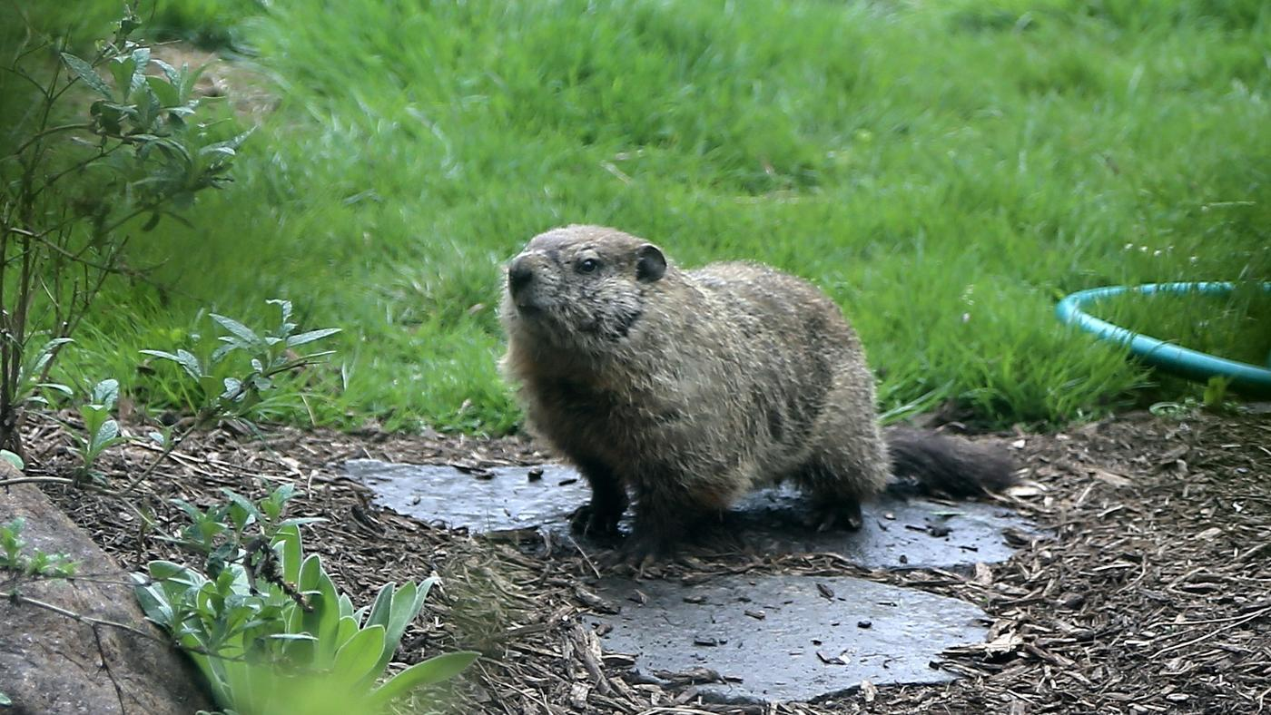 How Do You Get Rid of Groundhogs?