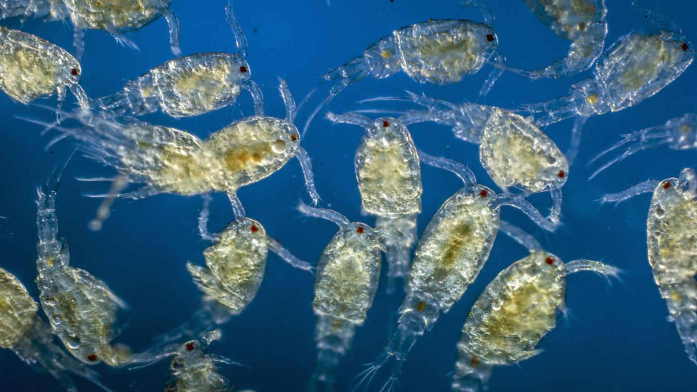 What Roles Does Plankton Play in the Ecosystem?