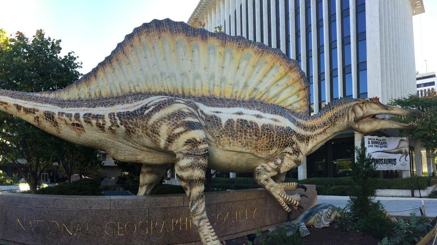 What's the Largest Carnivore to Ever Live?