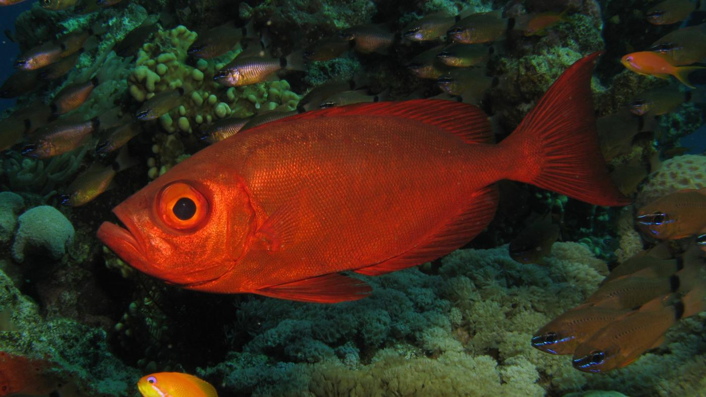 What Do Sea Fish Eat?