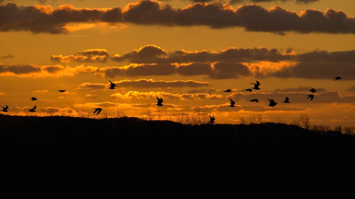Where Do Seagulls Go at Night?