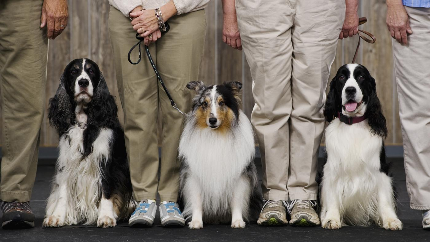How Is Selective Breeding Carried Out?