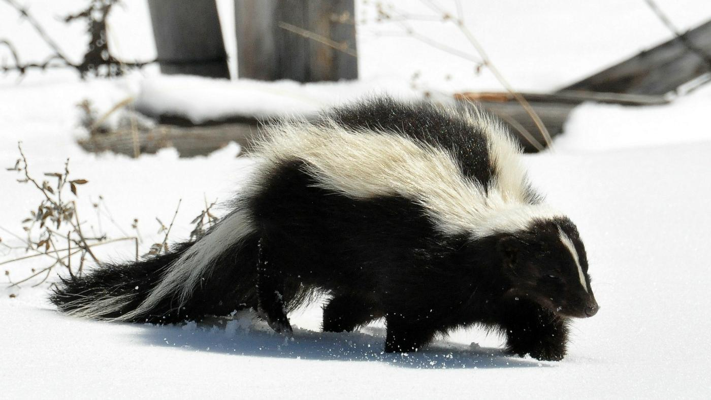 How Do I Get Skunk Smell Out of My Clothes?