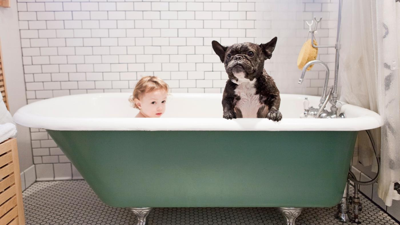Which Small Dog Breeds Are Best for Children?