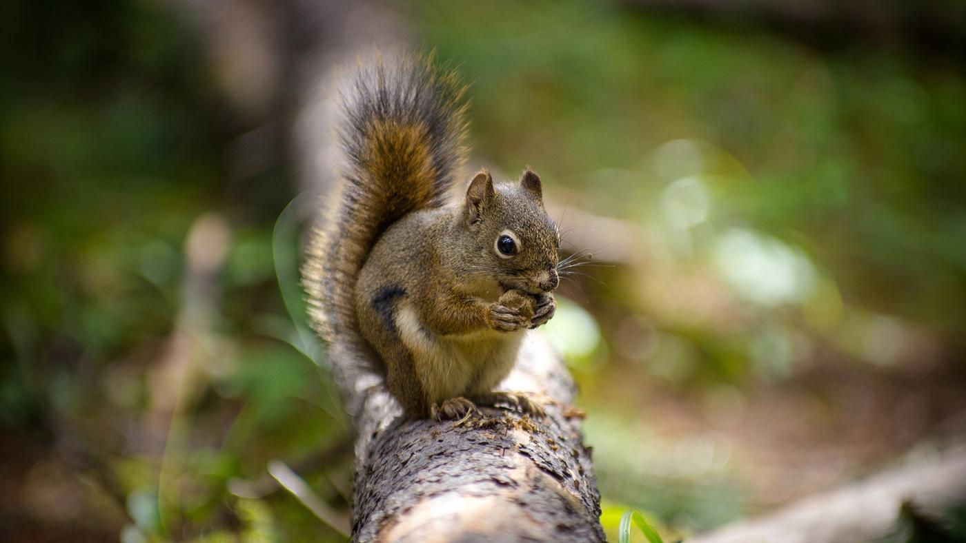 What Are Some Smells That Squirrels Hate?