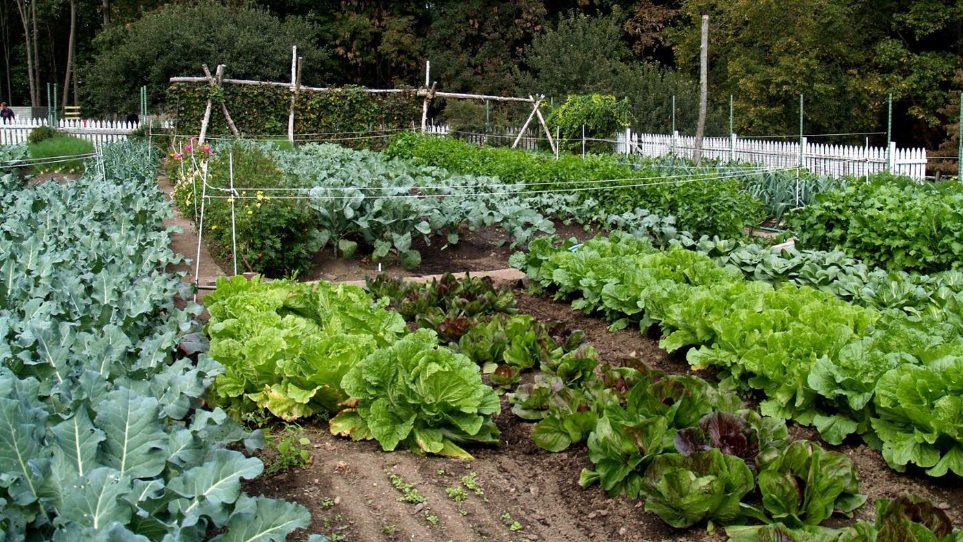 How Do You Start an Organic Garden?
