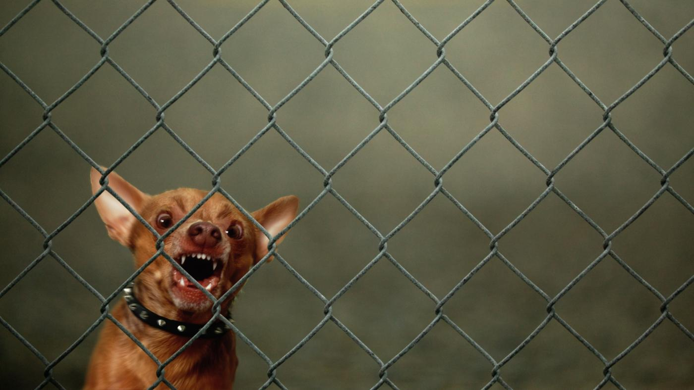 How Do You Stop a Dog From Barking at Night?