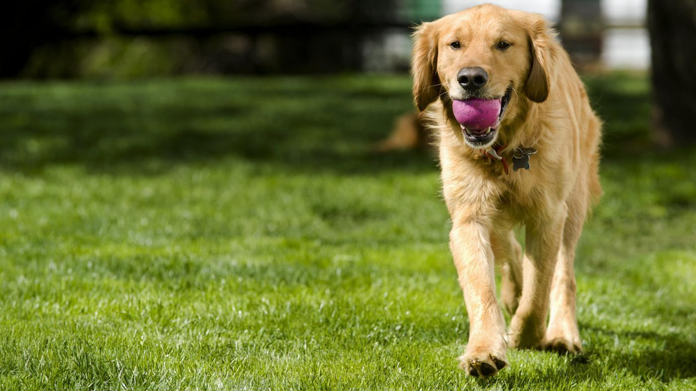 How Do I Stop Dogs From Fouling in My Garden?