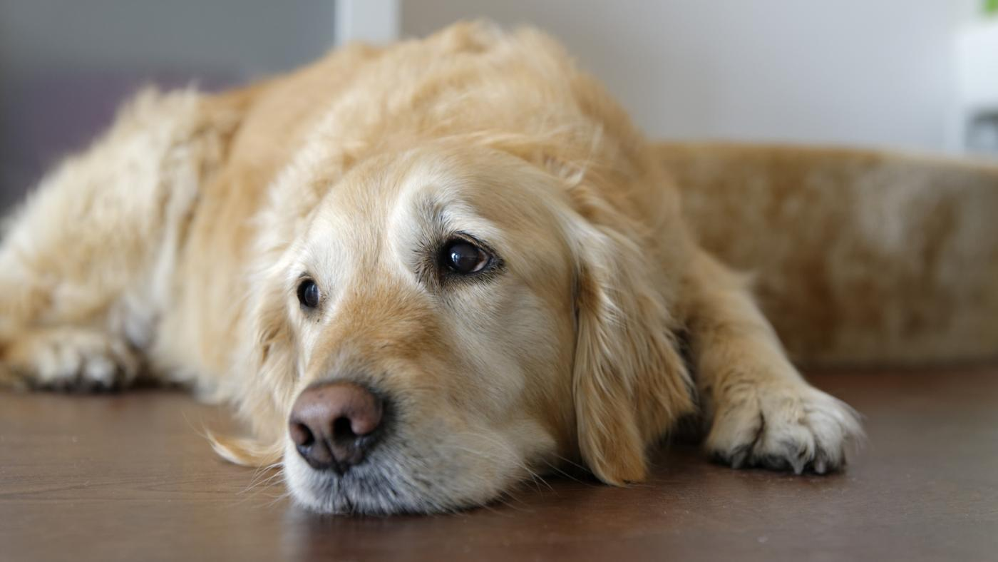 What Are the Symptoms That a Dog Is Dying?