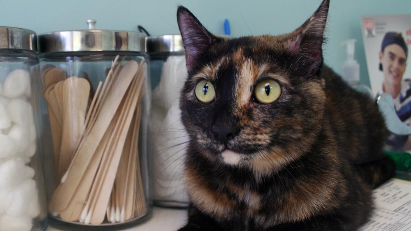 What Are Symptoms of Worms in Cats?
