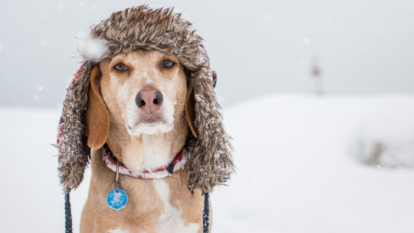 What Temperature Is Too Cold for a Dog?