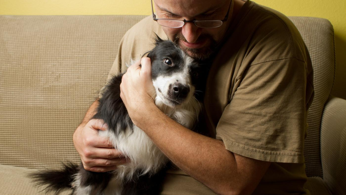 What Are Some Traits of a Border Collie Terrier Mix?