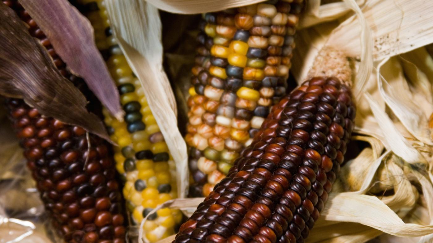 What Types of Food Did the Mohawk Indians Eat?