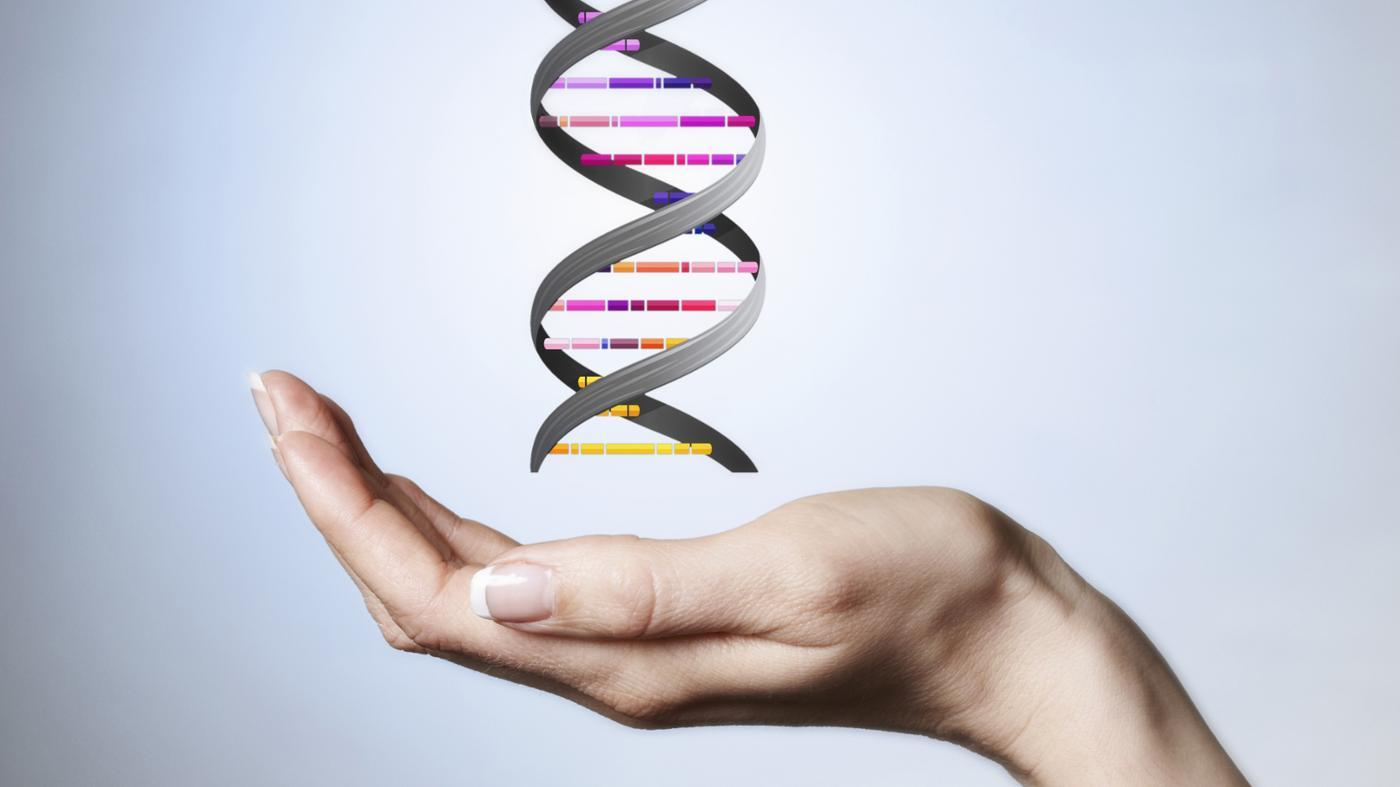 What Makes up the Backbone of the DNA Molecule?