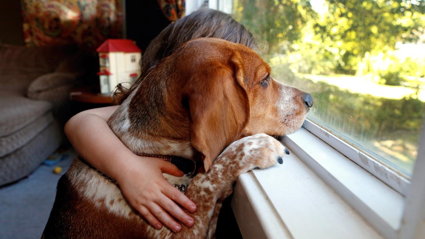 What Are the Warning Signs of a Dying Dog?