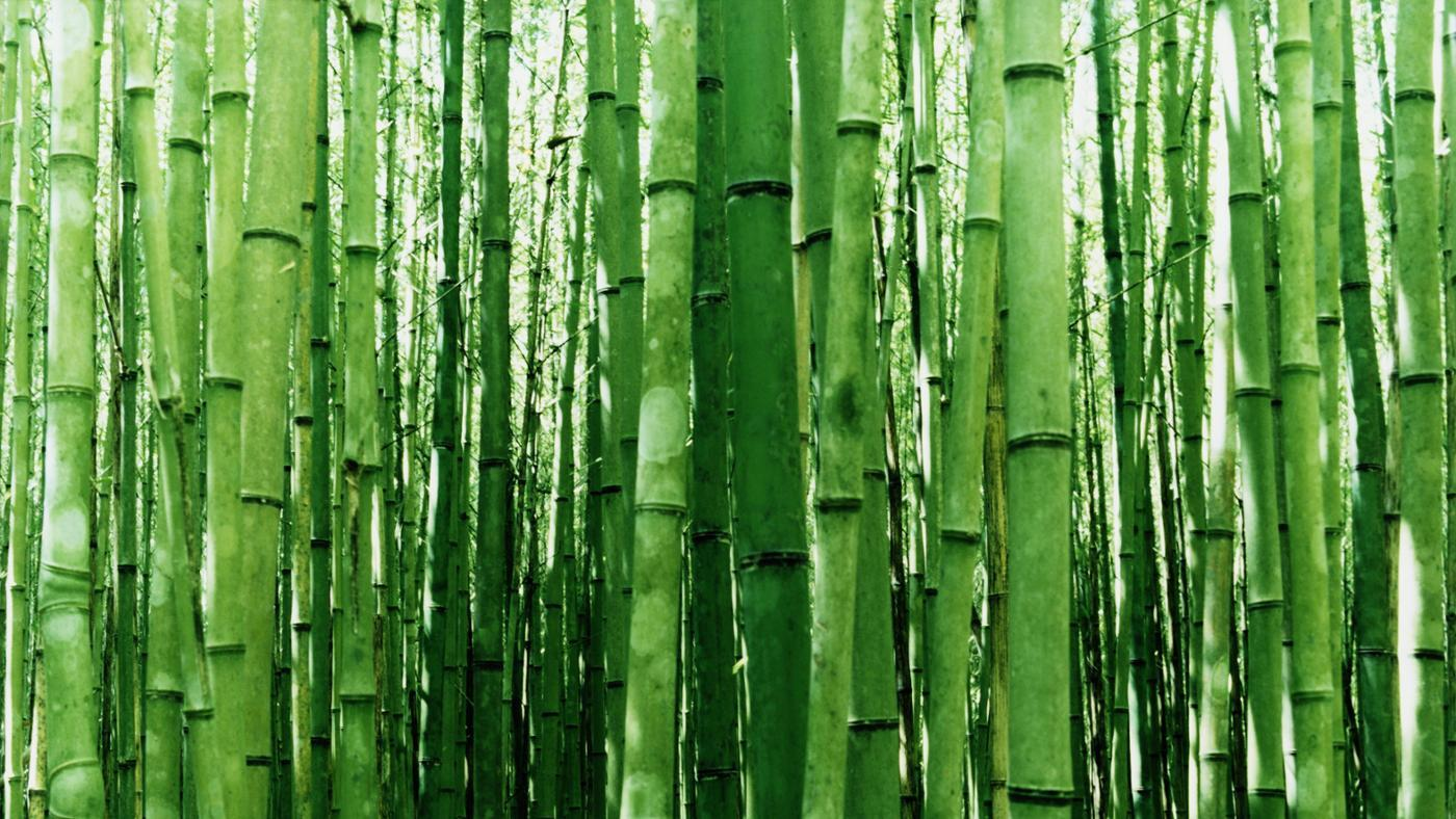 What Is the Best Way to Cut Bamboo?