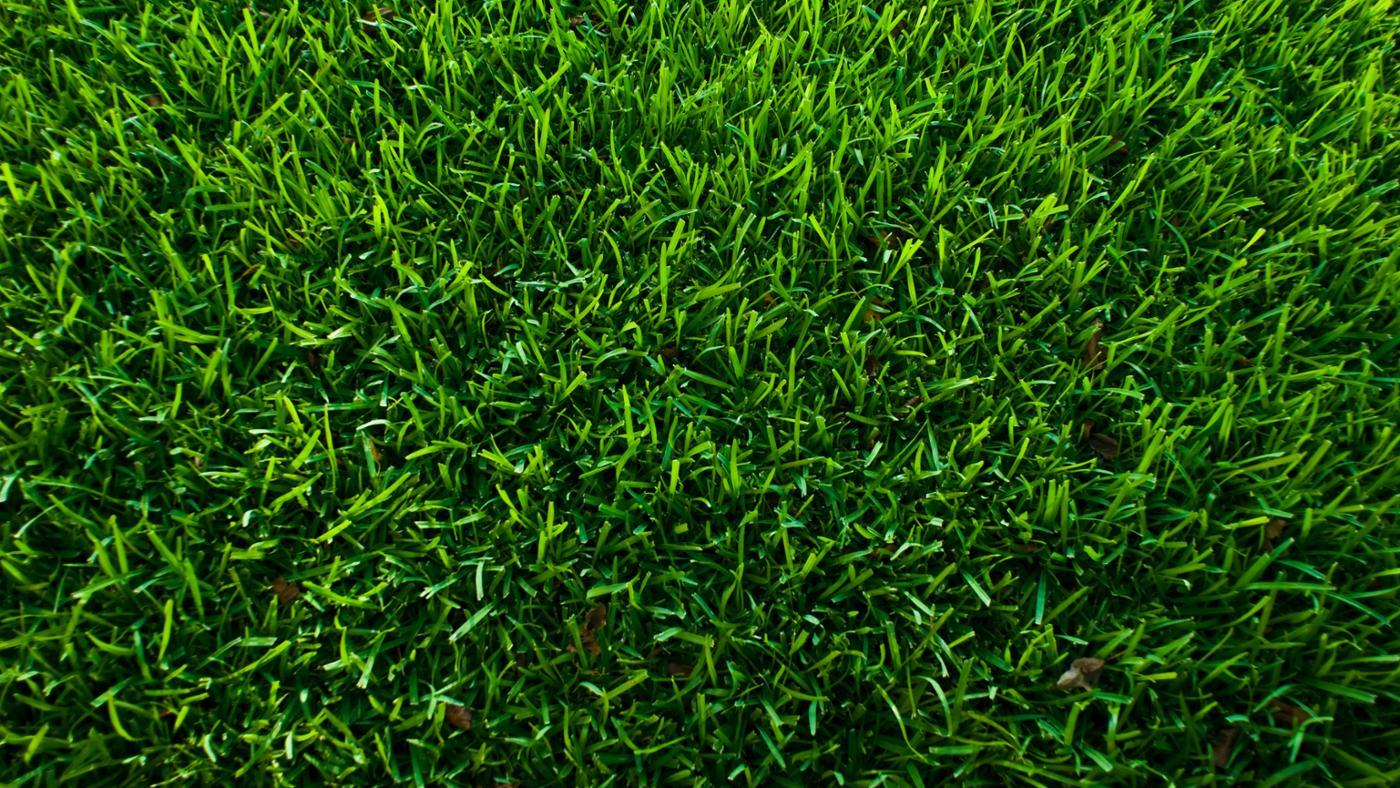 What Is the Best Way to Kill Grass?