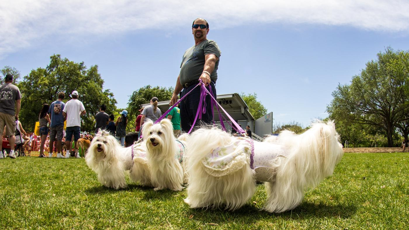 What Is the Best Way of Training a Maltese?