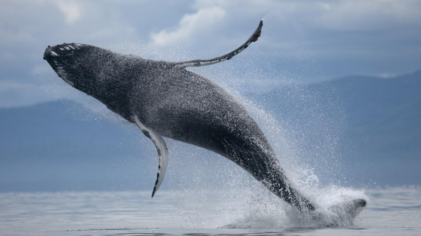 How Big Is a Whale's Stomach?