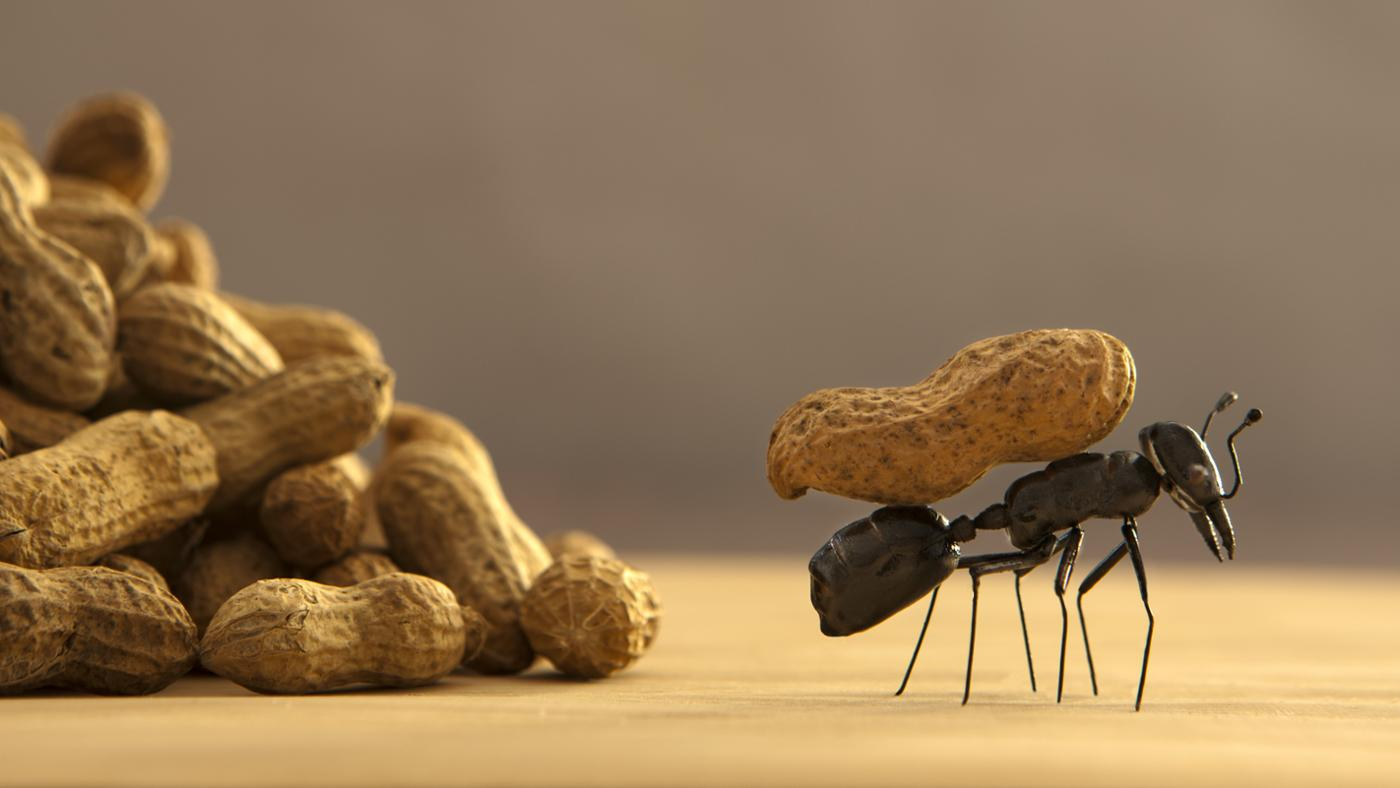 What Is the Best Way to Get Rid of Ants?
