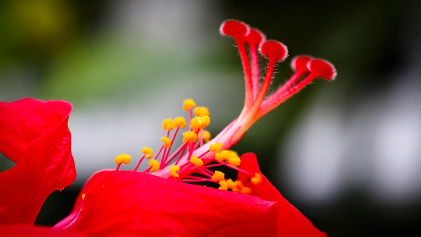 What Is the Center of a Flower Called?
