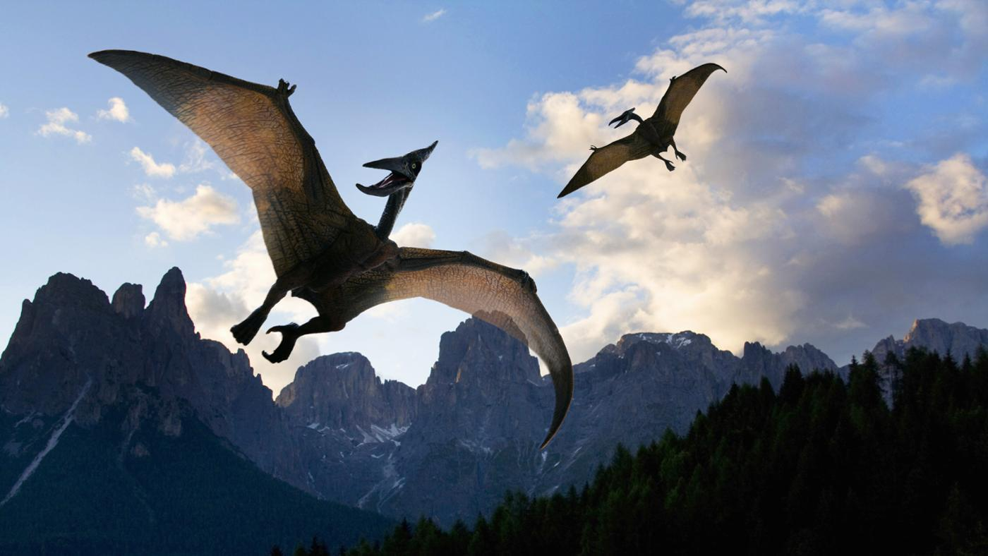 What Is the Wingspan of a Pterodactyl?