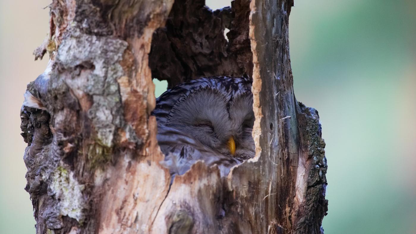 Where Do Owls Sleep?