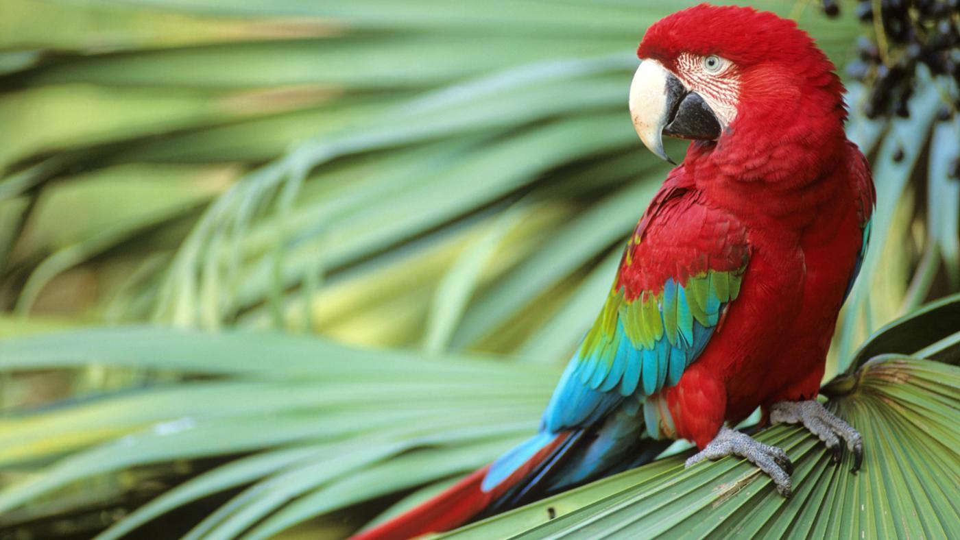 Where Do Parrots Live?
