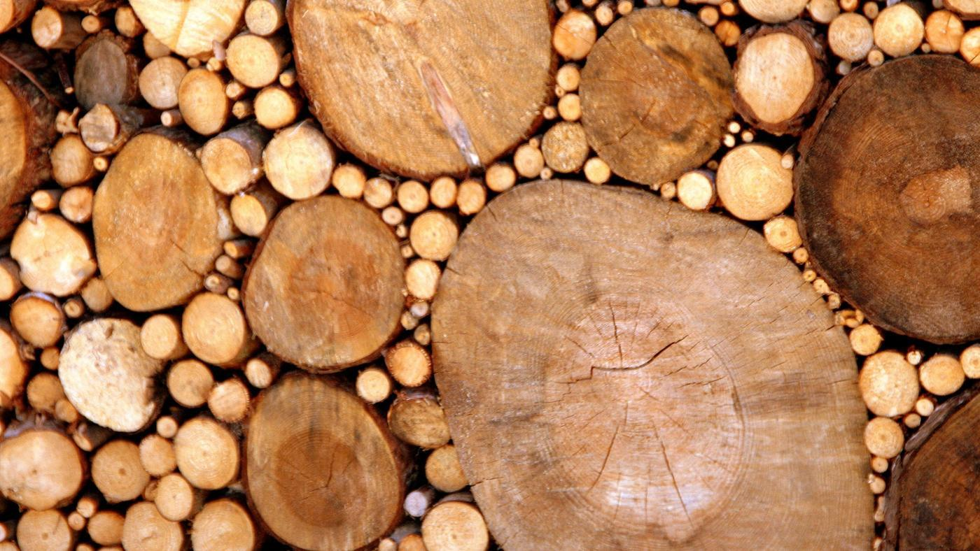 How Is Wood Formed?