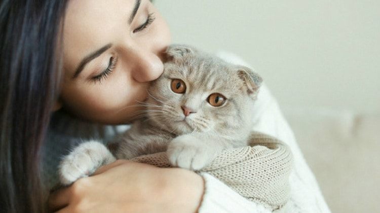5 Things Every New Cat Parent Should Know (Don't Panic)