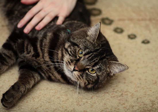 3 Steps to Take Care of Cat's Fur at Home Effectively (Include bathing tips!)