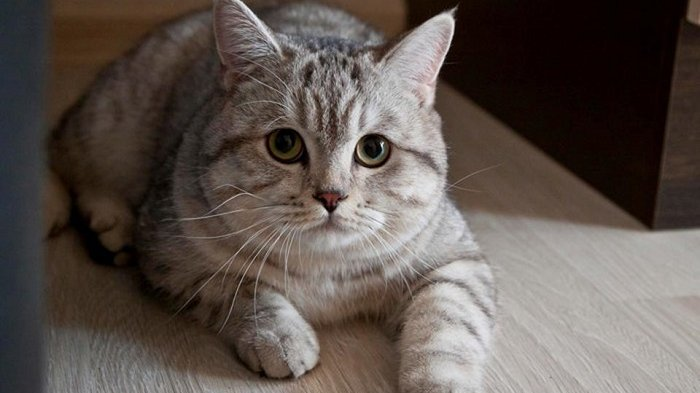 3 Basic Ways to Take Care of Cats at Home for Beginners