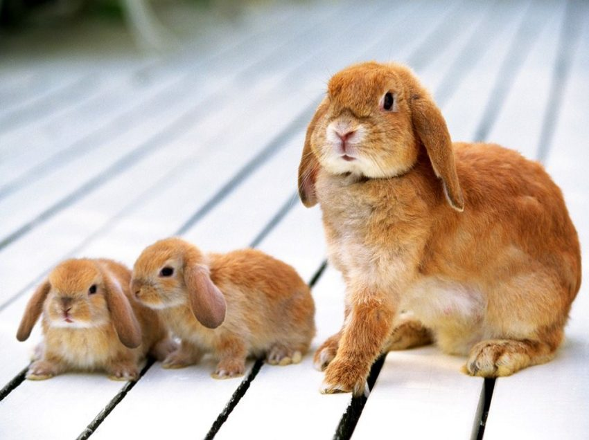 4 Easy Steps to Adopt A Rabbit for Beginners