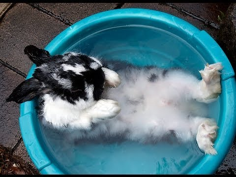 8 Easy and Safe Ways to Bathe Your Pet Rabbit at Home for Beginners
