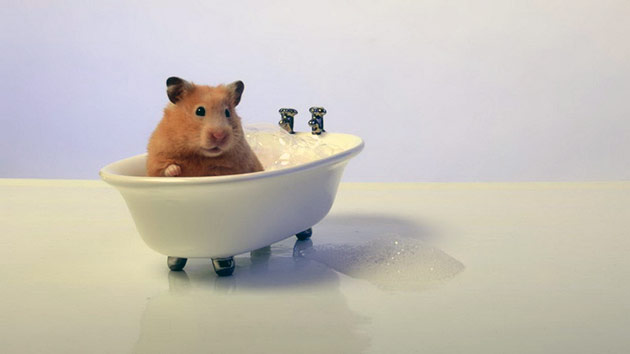 8 Ways To Bath Hamster Properly (must know!)