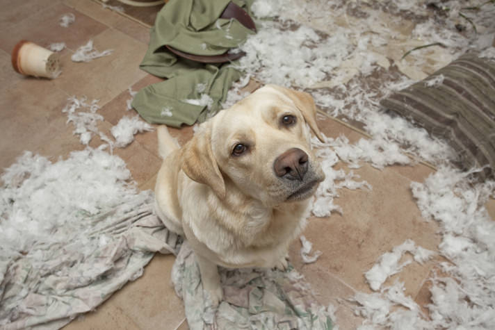13 Simple Ways To Dog-Proof Your Home