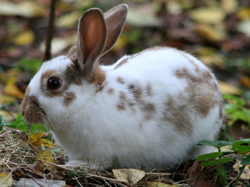 3 Ways to Pet A Domestic Rabbit for New Owner