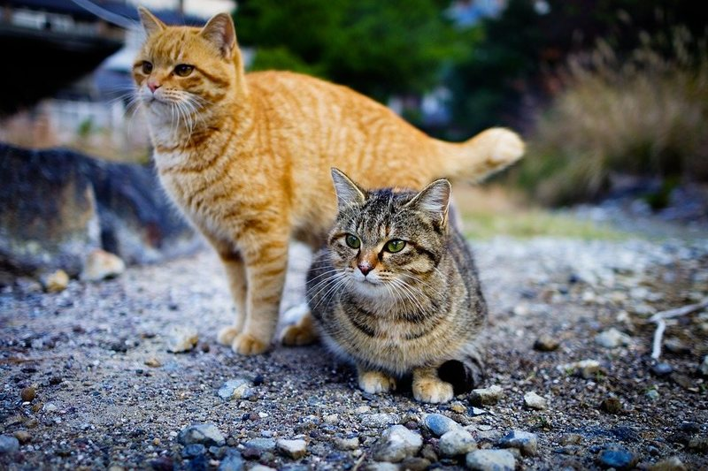 How to Tame A Feral Cat and Bring It Into Your Home