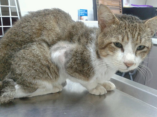 Fostering a Malnourished Cat? 4 Tips to Help The Cat Gain Weight