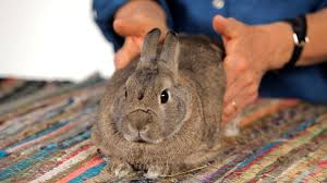 3 Tips to Massage Your Rabbit