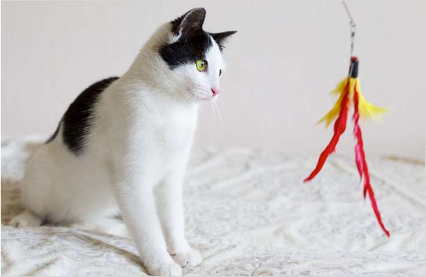 5Popular Tips to Keep Your Cat Happy Playing Indoors