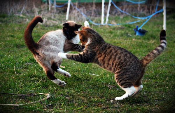 3 Symptoms to Tell That Your Cat Has Rabies