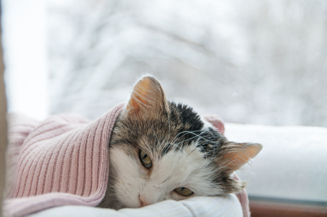 5 Ways To Treat Your Sick Cat With Home Remedies