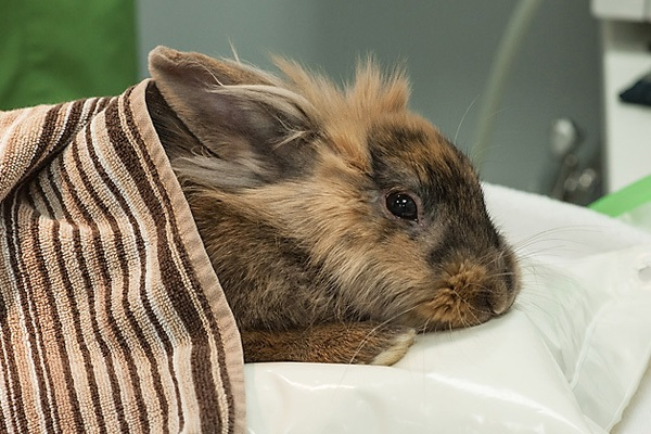 6 Effective Ways to Treat a Sick Rabbit with Home Remedies