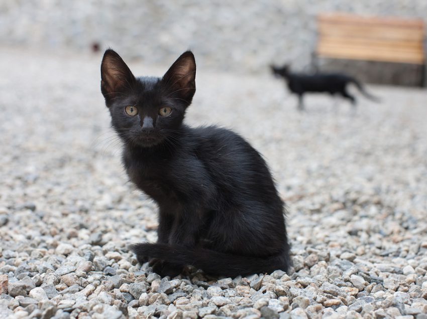 6 Ways To Fatten Up A Skinny Kitten Safe and Fast