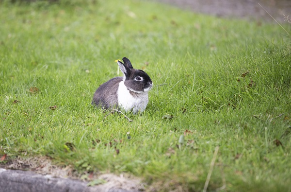 Do You Find A Stray Rabbit? Here Are 7 Ways to Catch It!