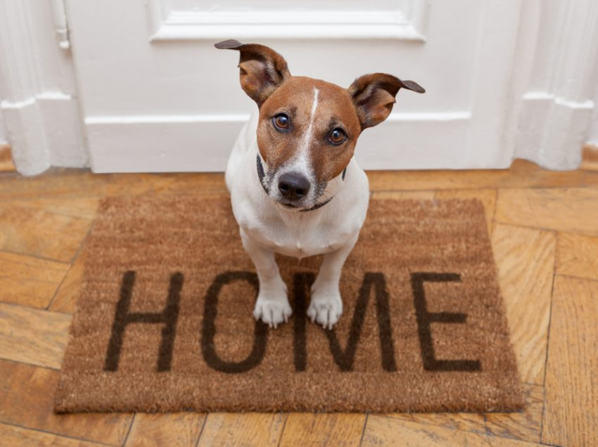 10 Signs That a Dog Insanely Happy When the Owner Gets Home