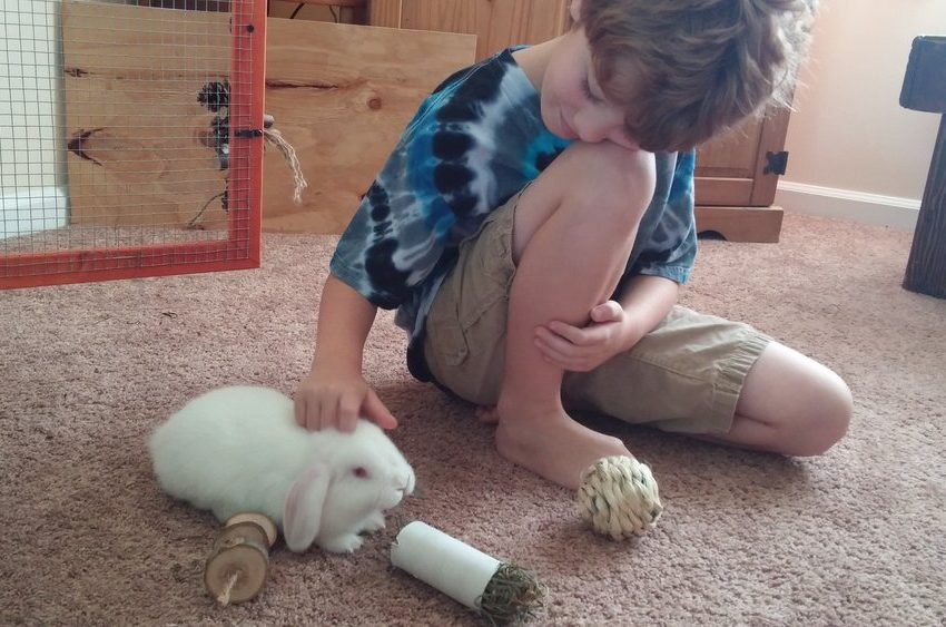 7 Guide to Bond With Your Pet Rabbit